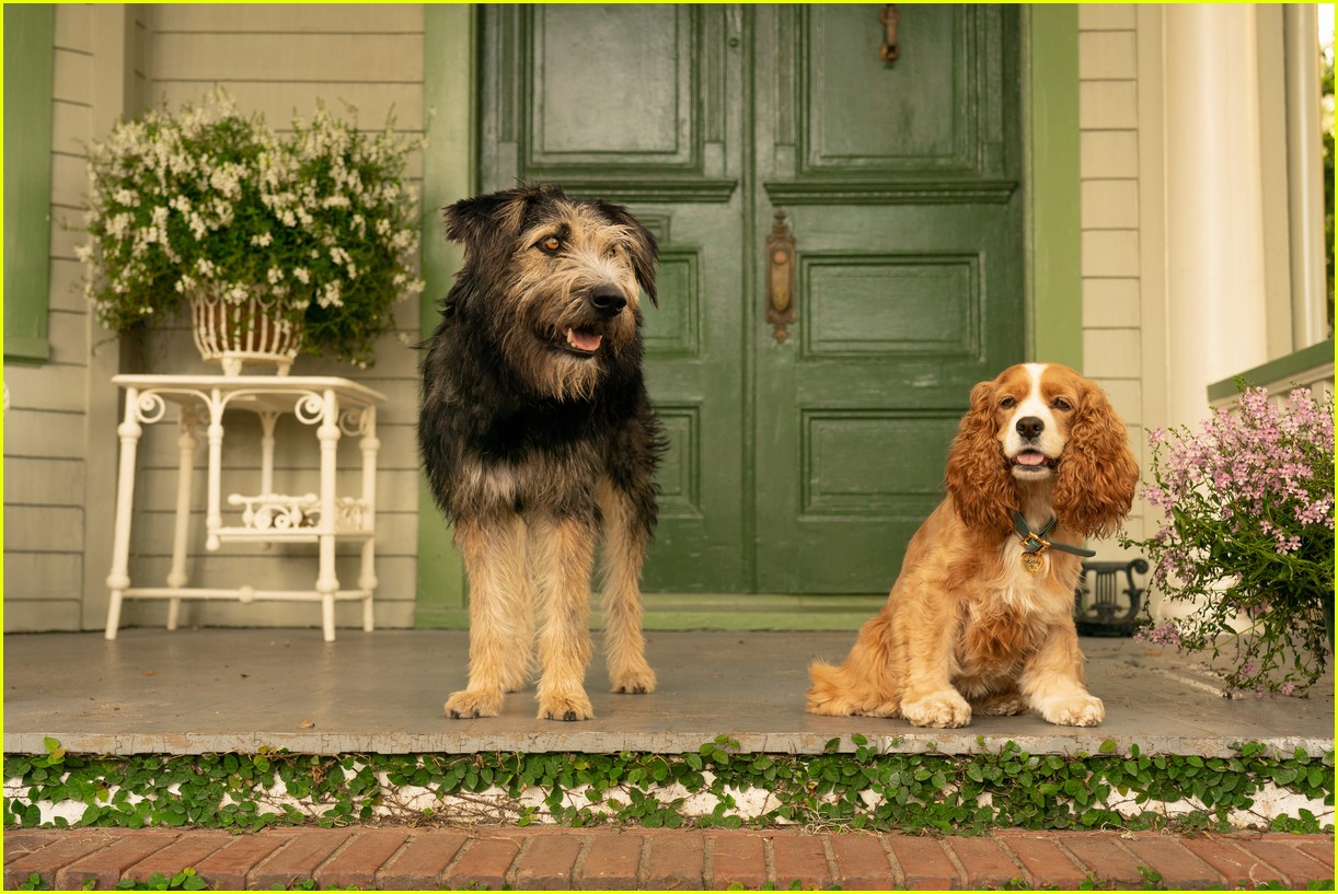 disneys live action lady and tramp gets new trailer 03.4371019