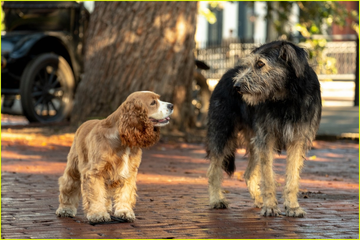 disneys live action lady and tramp gets new trailer 09.4371025