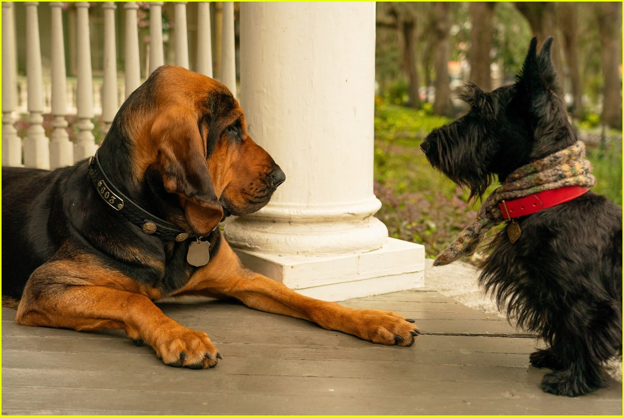 disneys live action lady and tramp gets new trailer 10.4371026